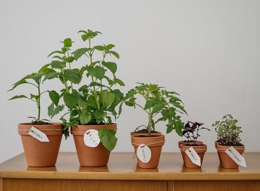 Welche Pflanzen sollten zur Linderung von Gelenk- und Muskelproblemen verwendet werden?