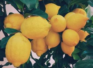 Lockerer Zitronenkuchen